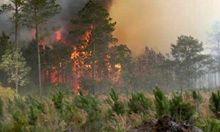Situata me zjarret  5 vatra në të gjithë vendin