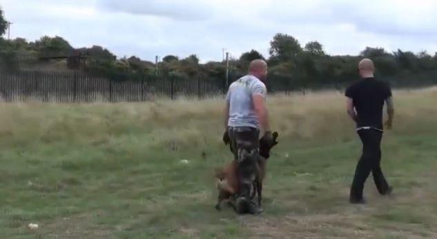 VIDEO  Shikoni si e mbron qeni kujdestarin e tij