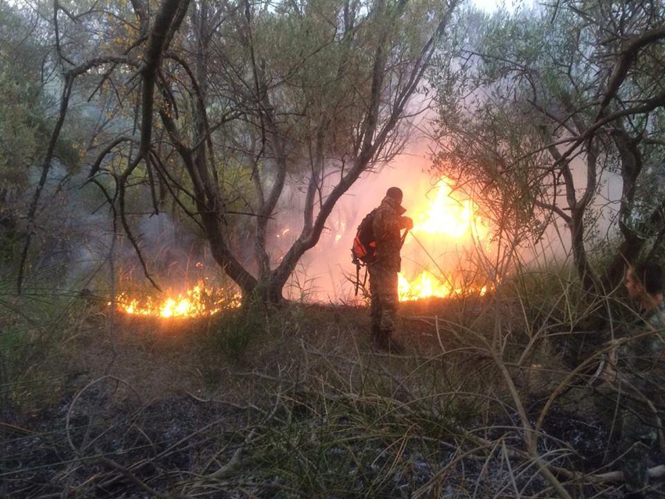 Zjarr në Bulqizë dhe Përrenjas  preken pyje dhe shkurre